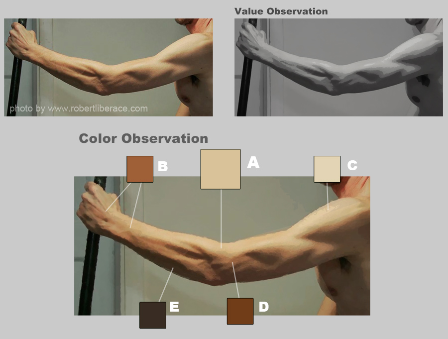 skin color palette demo1-observation